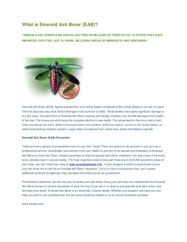 """What is Emerald Ash Borer (EAB)? """"EMERALD ASH BORER (EAB) HAS KILLED TENS OF MILLIONS OF TREES IN THE 19 STATES THEY HAVE ..."""