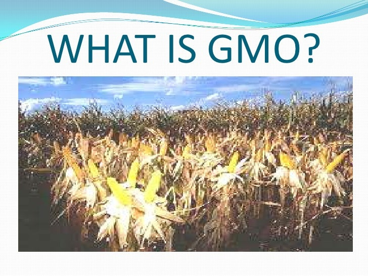 WHAT IS GMO?<br />