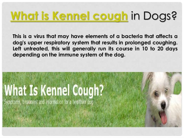 What is kennel cough for What is dog boarding