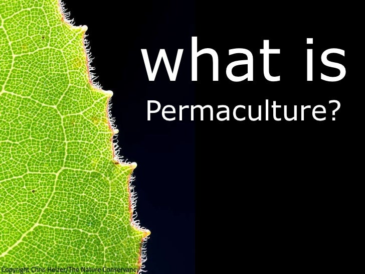what isPermaculture?
