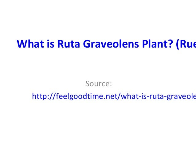 What is Ruta Graveolens Plant? (Rue Source: http://feelgoodtime.net/what-is-ruta-graveole