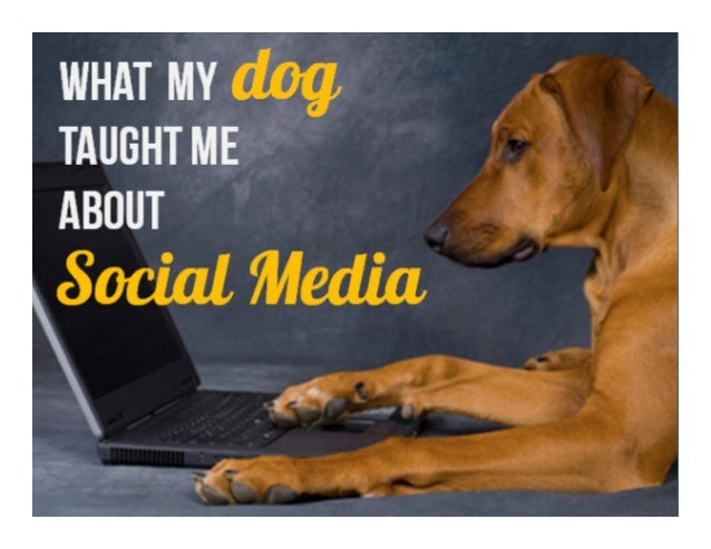 What my dog taught me about social media