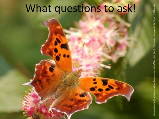 What questions to ask! http://upload.wikimedia.org/wikipedia/commons/8/8b/Question_Mark_Polygonia_interrogationis_Flower_2...