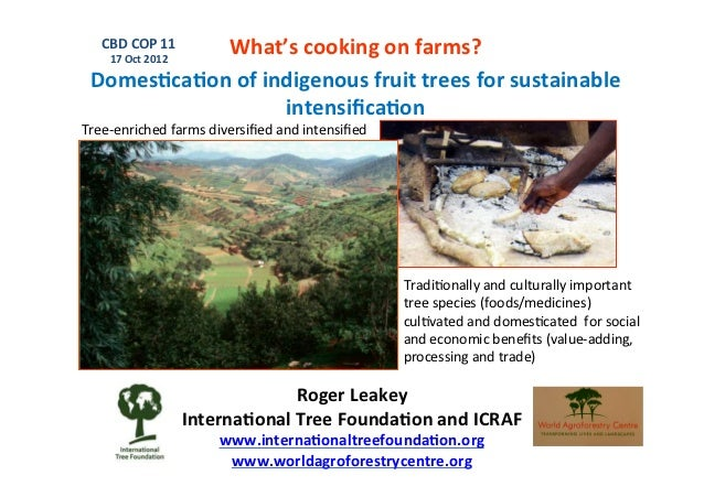 What's	  cooking	  on	  farms?	      CBD	  COP	  11	        17	  Oct	  2012	    Domes.ca.on	  of	  indigenous	  fruit	  tr...