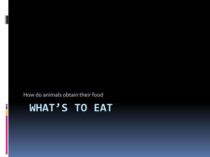 What's to eat<br />How do animals obtain their food<br />