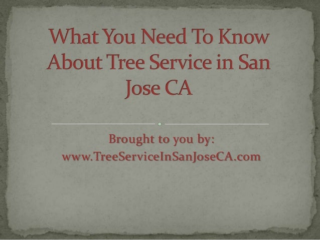 What You Need to Know About Tree Service in San Jose CA