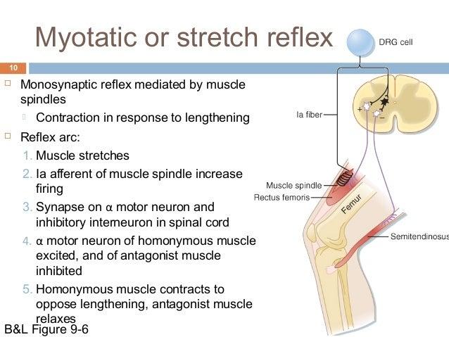 The Inverse Stretch Reflex or Tendon Reflex - Google Chrome.flv ...