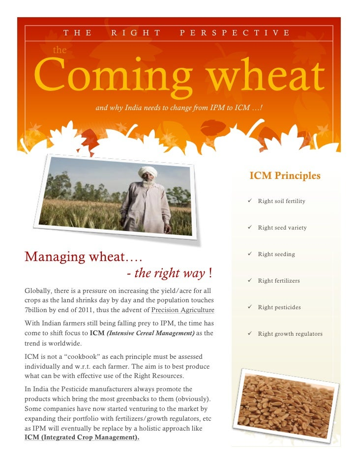 T H E            R I G H T               P E R S P E C T I V E         the  Coming wheat          and why India needs to c...
