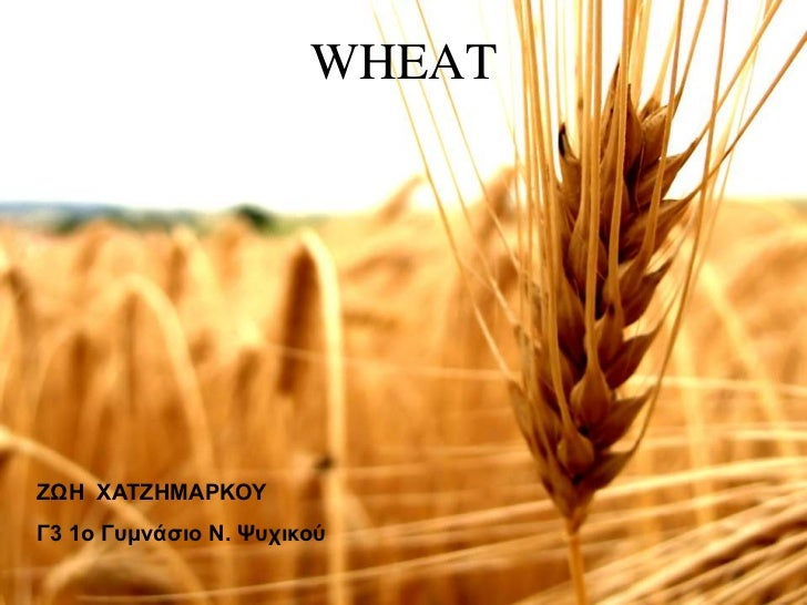 Wheat as an nutritional ingredient.