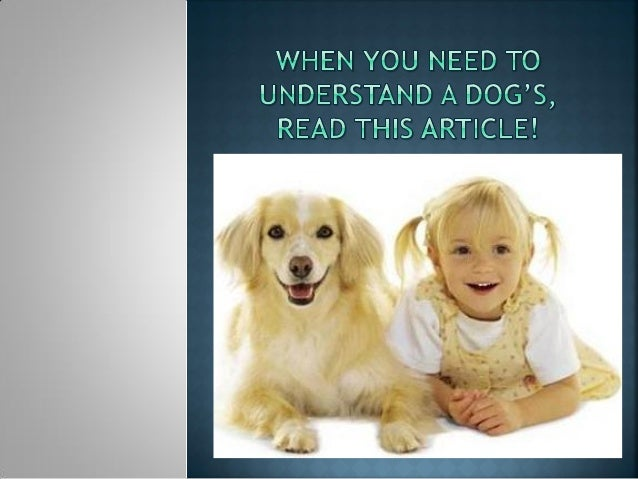 Whether you are considering getting a dog or you have onealready, you probably know that a lot goes into caring fordogs. I...