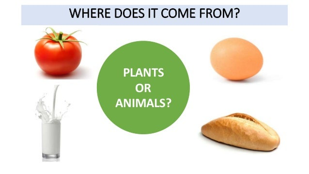 Where does food come from it comes from plants animals