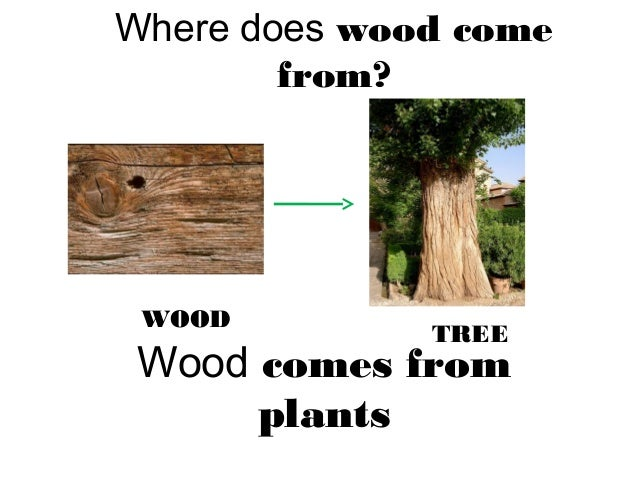 Where does wood come from treed woodd wood comes from