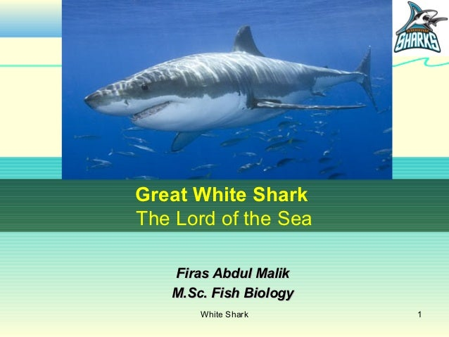 Great White SharkThe Lord of the Sea   Firas Abdul Malik   M.Sc. Fish Biology       White Shark      1
