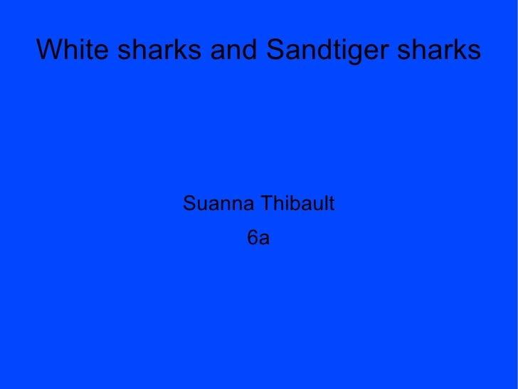 White Sharks And Sandtiger Sharks Susanna