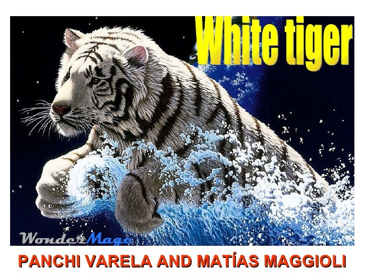 PANCHI VARELA AND MATÍAS MAGGIOLI  White tiger