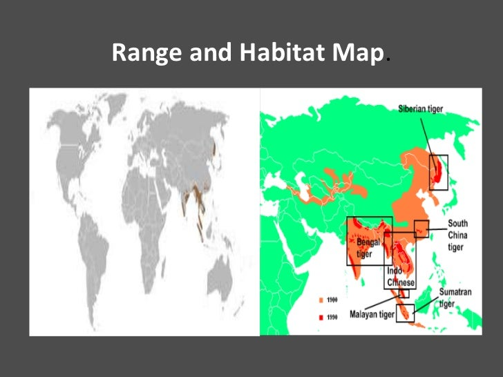 white tiger habitat map. Black Bedroom Furniture Sets. Home Design Ideas