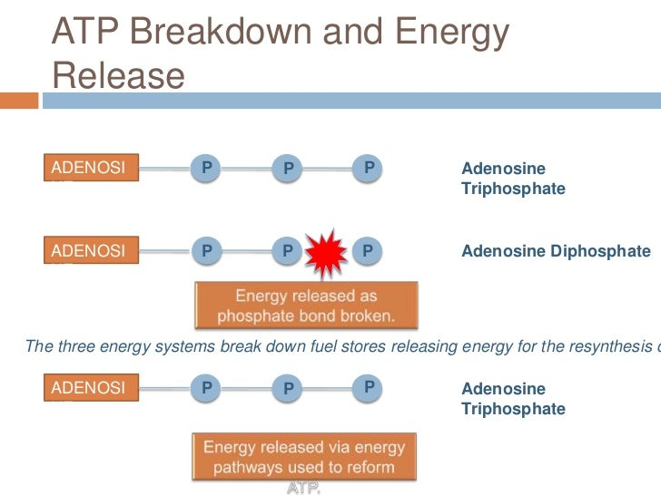 resynthesis of atp A short video on the aerobic energy system want music and videos with zero ads get youtube red.