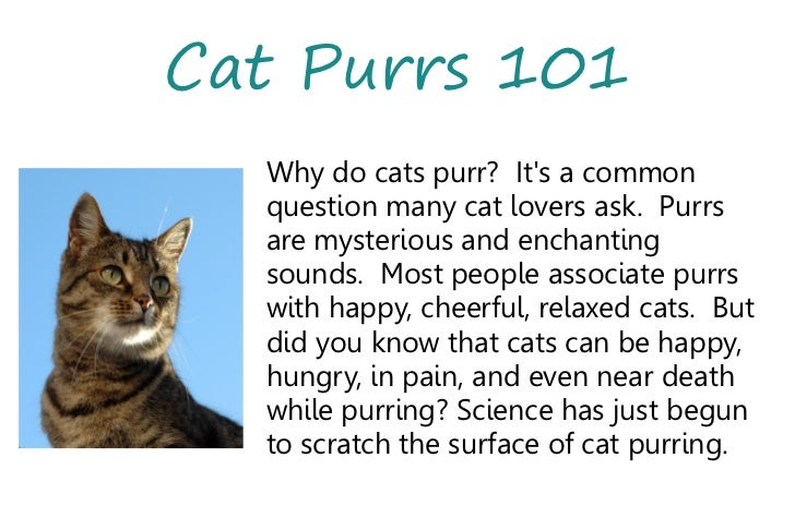 Why Do Cats Purr? This Is What Experts Have to Say | Best Life
