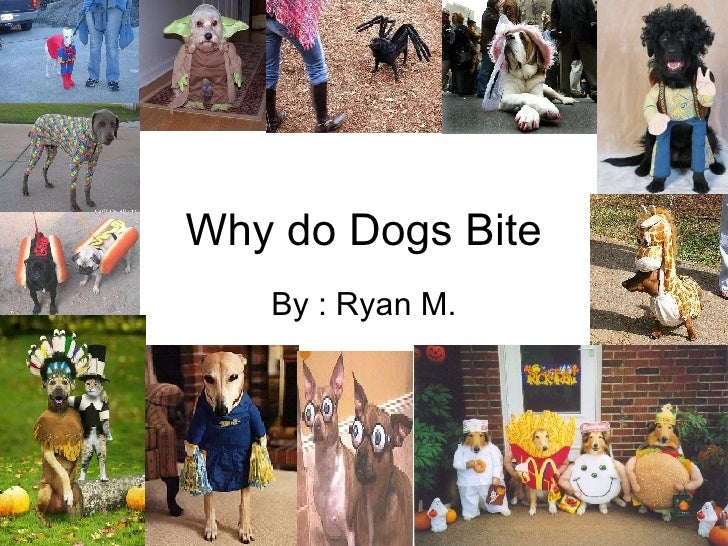 Why do Dogs Bite By : Ryan M.