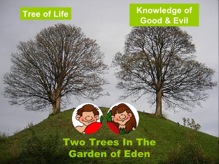 Tree of Life vs Tree of Knowledge of Good And Evil Tree of Life Knowledge of Good