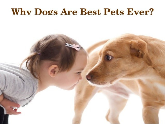 dogs are the best pets essay