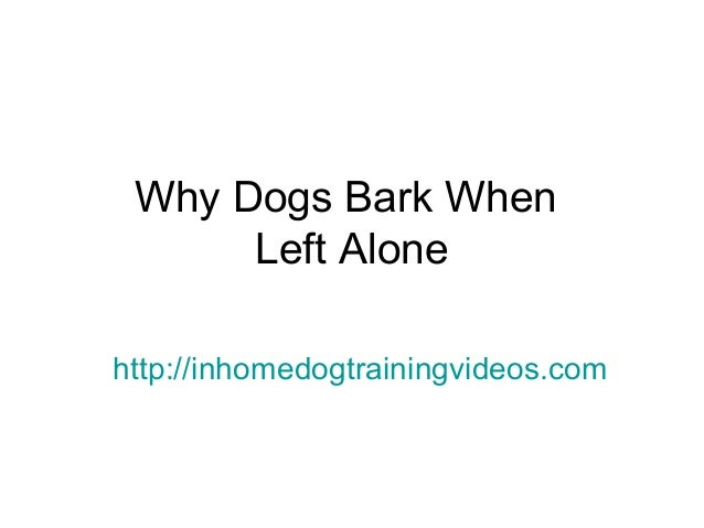 Why Dogs Bark When Left Alone