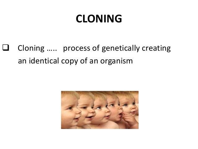Cloning Essay