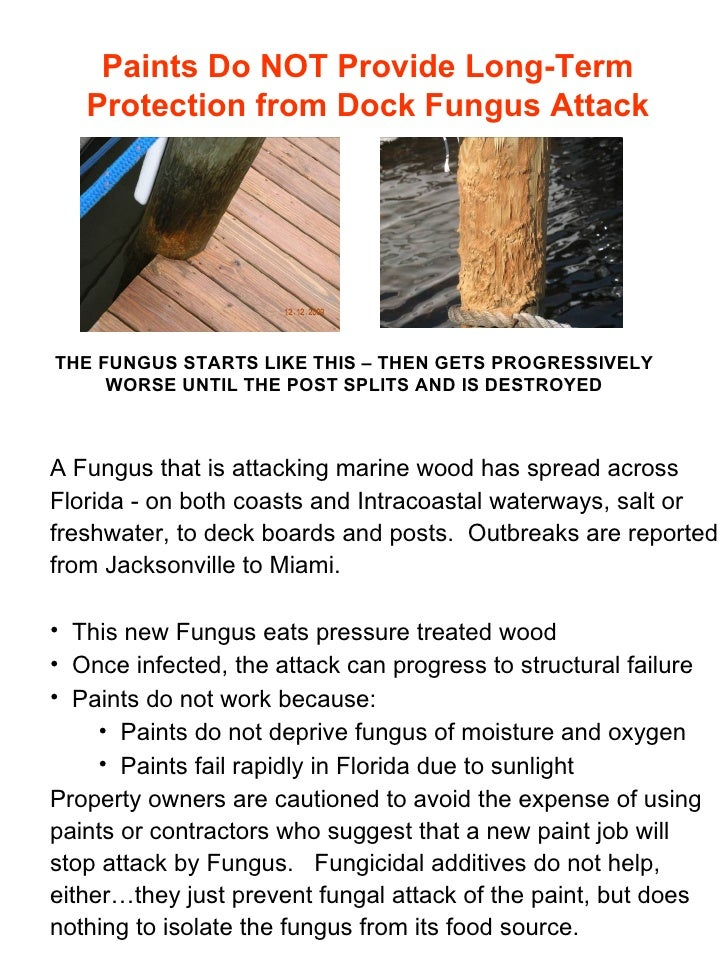 Paints Do NOT Provide Long-Term Protection from Dock Fungus Attack THE FUNGUS STARTS LIKE THIS – THEN GETS PROGRESSIVELY W...