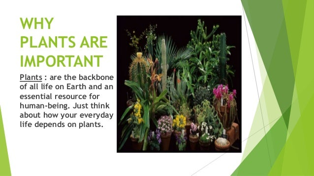 importance of plants to human life It is difficult to rate the importance of the different soil functions, since all are  for  the preservation and advancement of human life on this planet  those plants —some of which we are still discovering—provide food, fuel,.