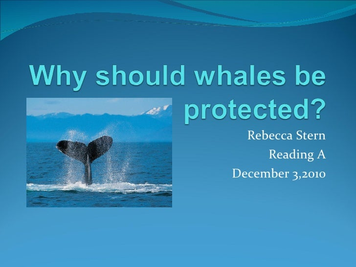 Rebecca-Why should whales be protected