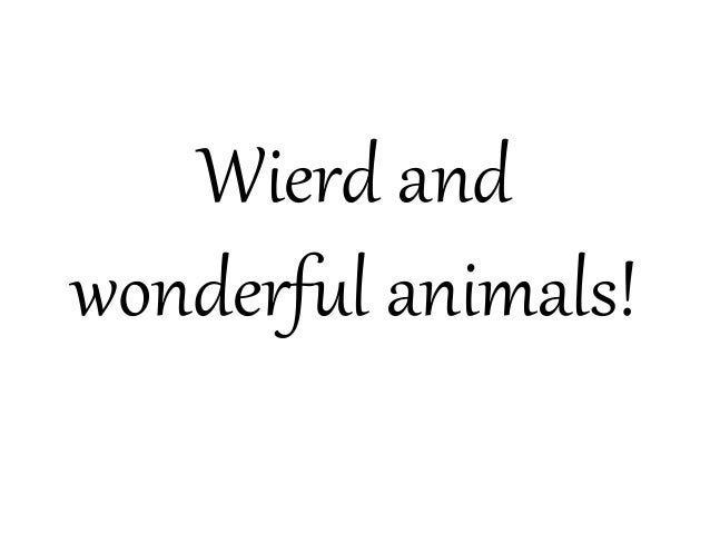 Wierd andwonderful animals!