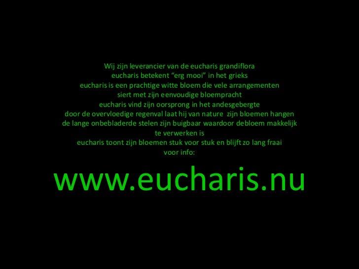 toepassingen met eucharis