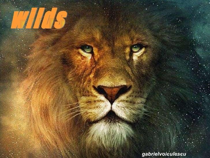 Wild=