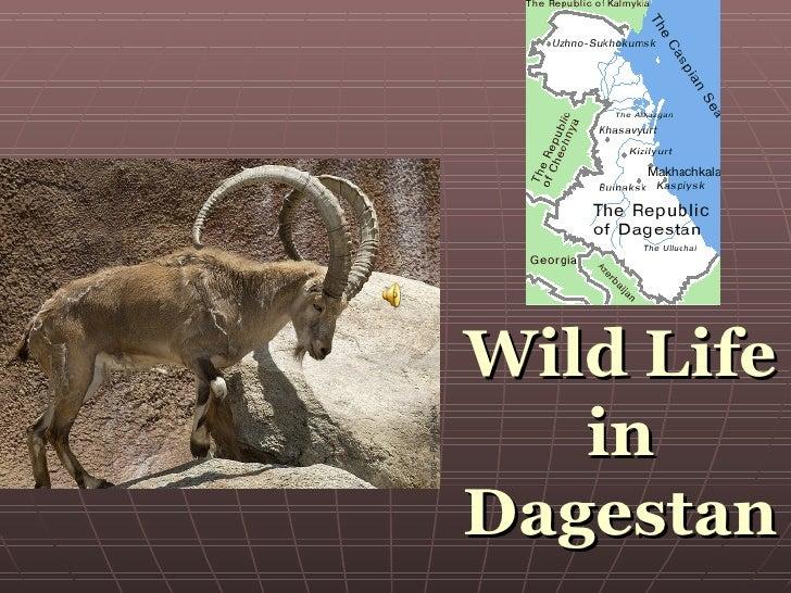 Wild Life in Dagestan
