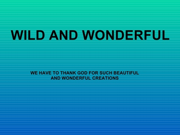 Wild and Wonderful (td)