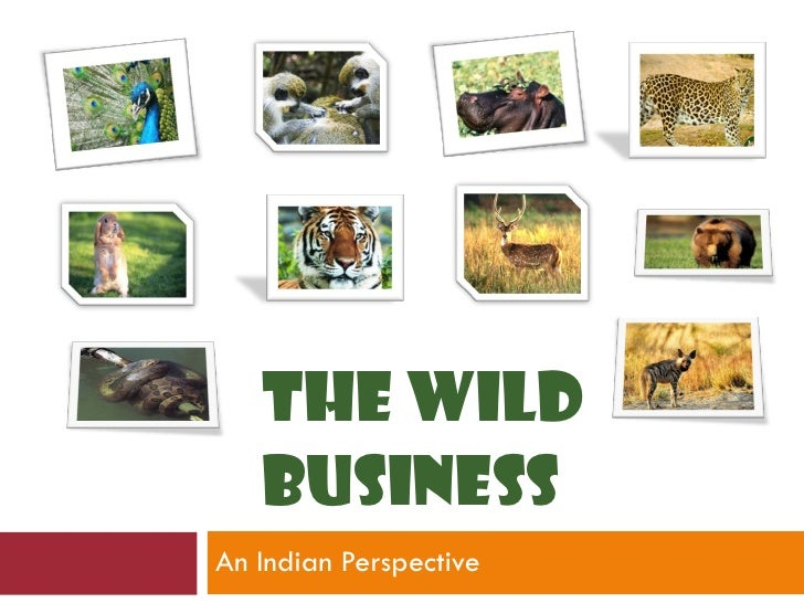An Indian Perspective THE WILD BUSINESS