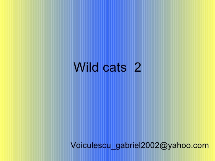Wild cats  2 [email_address]