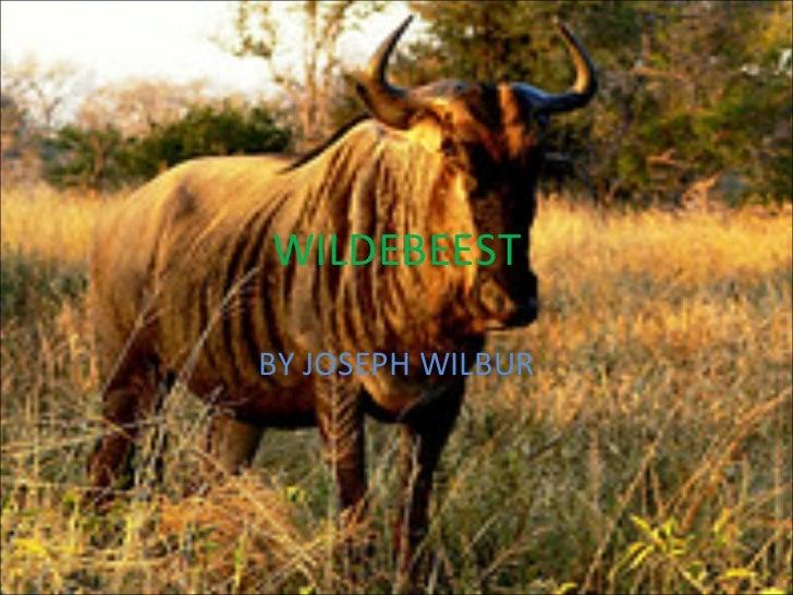 WILDEBEEST BY JOSEPH WILBUR