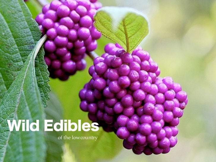 Wild Edibles      of the lowcountry