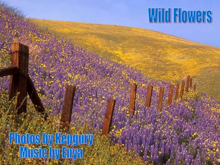 Wild Flowers Photos by Kepgury Music by Enya