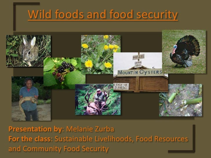 Wild foods and food security<br />Presentation by: Melanie Zurba<br />For the class: Sustainable Livelihoods, Food Resourc...