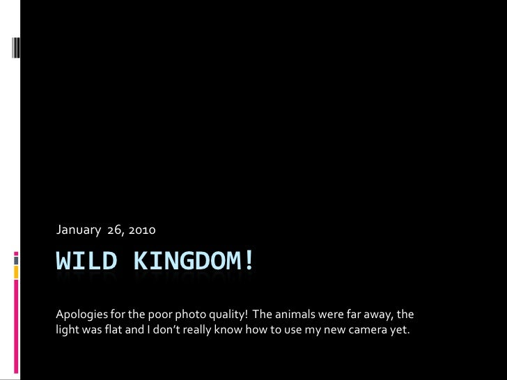 Wild kingdom!<br />January  26, 2010<br />Apologies for the poor photo quality! The animals were far away, the light was f...