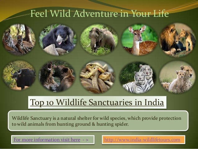 Feel Wild Adventure in Your Life        Top 10 Wildlife Sanctuaries in IndiaWildlife Sanctuary is a natural shelter for wi...