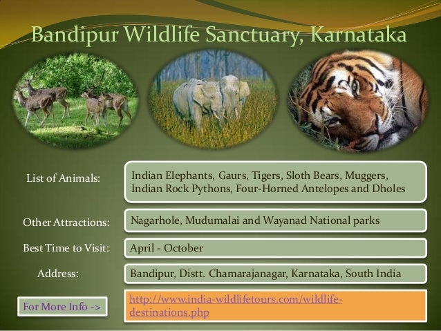 wildlife sanctuaries of india essay Wildlife sanctuaries in india attracts people from all over the world as the rarest of rare species are found here manas wildlife sanctuary essay.