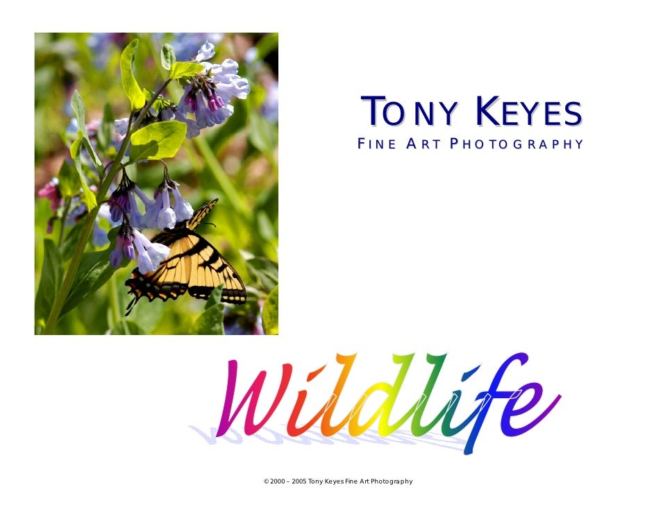 TONY KEYES                             FINE ART PHOTOGRAPHY     © 2000 – 2005 Tony Keyes Fine Art Photography