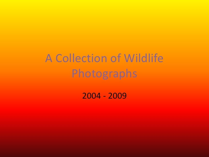 A Collection of Wildlife Photographs<br />2004 - 2009<br />