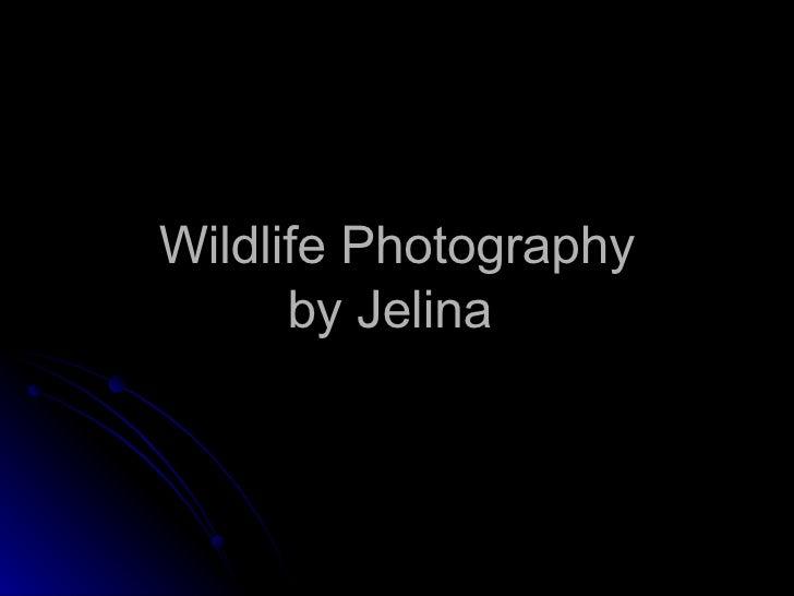 Wildlife Photography by Jelina