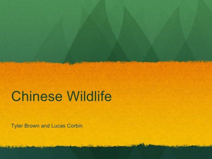 Chinese Wildlife Tyler Brown and Lucas Corbin