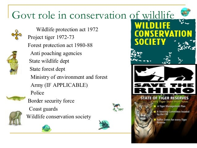 effects of wildlife conservation in india The ngos there are also various ngos working on wildlife conservation in india such as wildlife society of orissa (orissa), rhino foundation for nature.