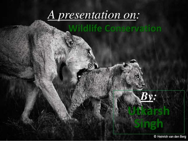 animal conservation essay